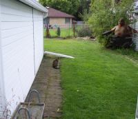 Attached Image: cat and commander2.jpg