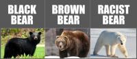Attached Image: 2Bears.jpg