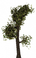 Attached Image: tree1.png