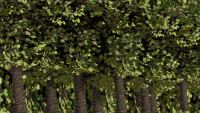 Attached Image: TREEBACKPALA.png
