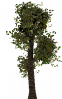 Attached Image: tree2.png